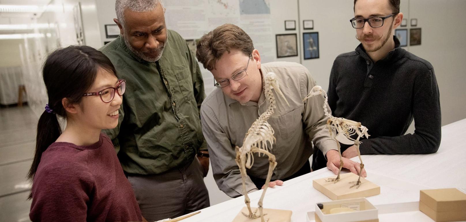 Convergent regulatory evolution & loss of flight in paleognathous birds
